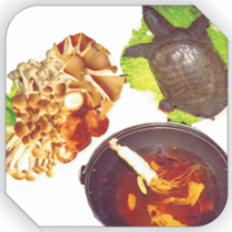 Lẩu baba trường thọ / turtle nutrient hotpot